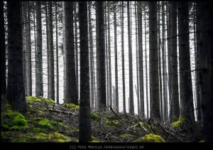 Trädstammar och mossa