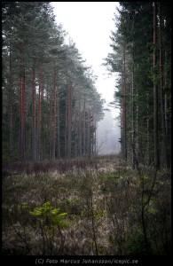 Bredbandsgata i urskogen