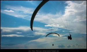 2296-Skarmflygare