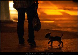 05813-Liten-hund-i-motljus