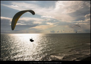 2307-Skarmflygare-mot-horisonten
