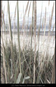 Fotokonst Gräs