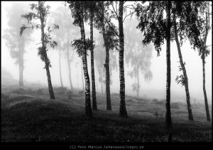 3930-Morgon-bjork