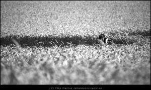 9752-Anna-fotograferar-i-faltet